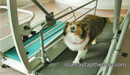 Địa chỉ mua bán máy chạy bộ cho chó ở đâu giá rẻ